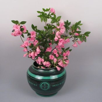 Azaleas and Cowan Pottery